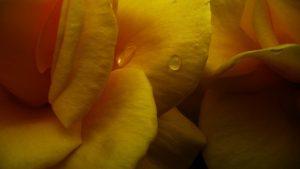giallo come si abbina